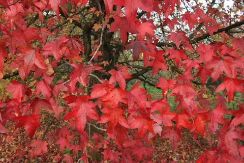 Spectacular autumn colours