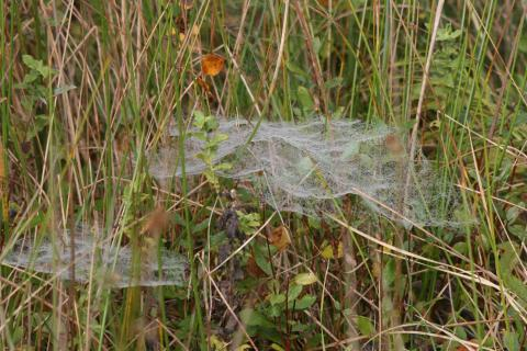 Spider's webs